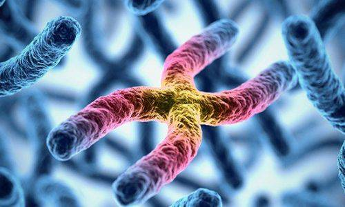 Genetics May Affect Mesothelioma